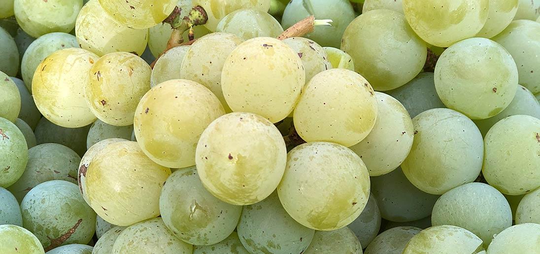 Close up of green grapes.